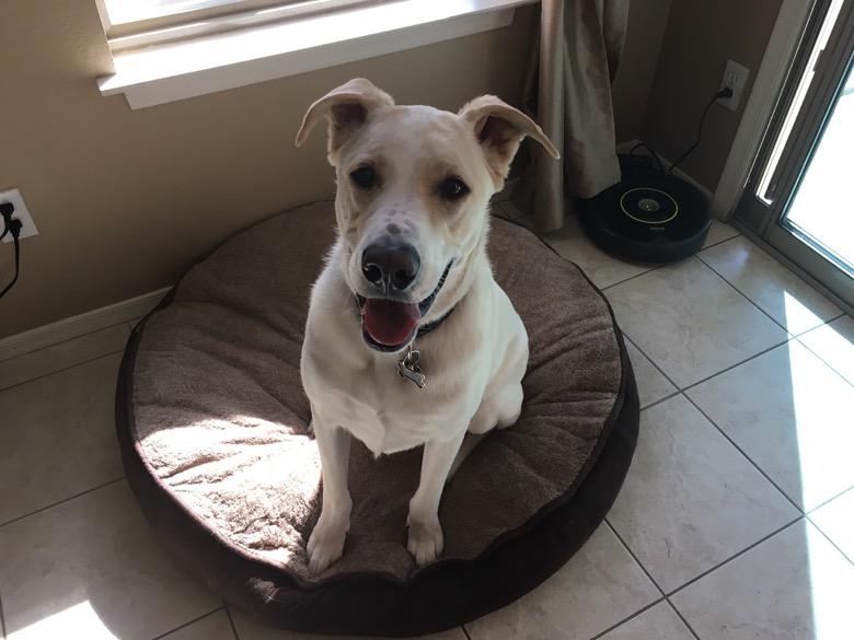 are bully sticks safe for dogs good pet parent. Black Bedroom Furniture Sets. Home Design Ideas
